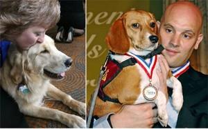 Bạn trẻ - Cuộc sống - Câu chuyện cảm động về 25 chú chó dũng cảm cứu người