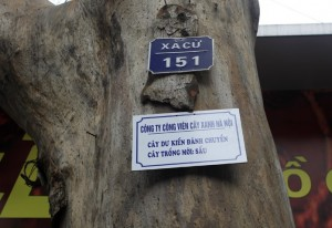 Tin tức trong ngày - Chặt 6.700 cây xanh: HN treo biển lên cây để dân góp ý