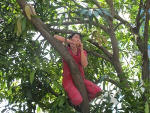 """Tin tức trong ngày - HN: Gặp người phụ nữ từng """"cố thủ"""" trên cây phản đối chặt hạ"""