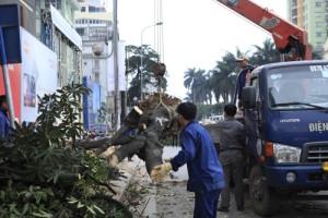 """Tin tức trong ngày - GS Nguyễn Lân Dũng: """"6.700 cây bị chặt hạ là số quá lớn"""""""