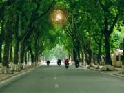 """Bạn trẻ - Cuộc sống - Nồng Nàn Phố làm thơ tặng 6.700 cây xanh bị """"khai tử"""""""