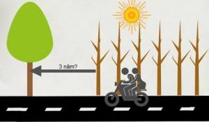 Tin tức Việt Nam - Vụ chặt 6.700 cây xanh: 'Thay bằng cây vàng tâm là không phù hợp'