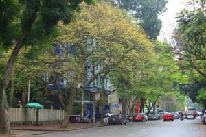 Tin tức trong ngày - Sắc màu Hà Nội chỉ là hoài niệm nếu 6.700 cây bị đốn hạ