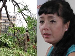 """Phim - NSƯT Chiều Xuân: Tôi gào khóc như """"mụ điên"""" bảo vệ cây"""