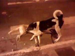 8X + 9X - Clip: Chú chó dùng cả thân mình che chở cho bạn