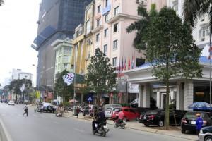 Hà Nội: Cây  lạ  được thay trên phố ban đêm?