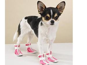 Tin tức thời trang - Bật cười ngắm thú cưng khổ sở khi bị ép đi giày