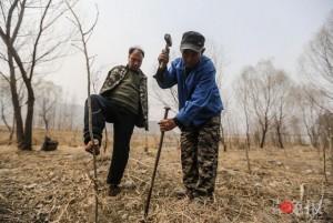 Thế giới - TQ: Lão cụt dắt lão mù trồng 10.000 cây bảo vệ làng