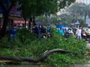 Thanh tra Chính phủ đề nghị làm rõ đề án chặt hạ 6.700 cây xanh