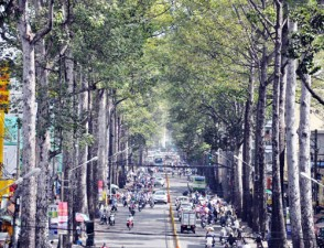 """Tin tức Việt Nam - Người Sài Gòn """"trốn"""" nắng dưới những hàng cây cổ thụ"""