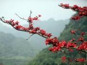 Du lịch Việt Nam - Hà Nội tháng Ba, miên man mùa hoa gạo