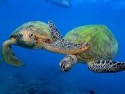 Video An ninh - Cuộc hành trình vĩ đại của loài rùa biển