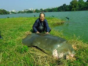Tin tức Việt Nam - Thực hư thông tin cụ rùa Hồ Gươm qua đời