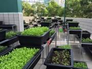 Giáo dục - du học - Thêm một trường học làm vườn rau sạch cho học sinh