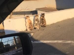 Bạn trẻ - Cuộc sống - Thích thú với 3 chú mèo đứng bằng hai chân