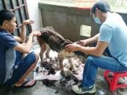 Tin tức trong ngày - Chàng trai Hà Tĩnh thuê trọ cứu chó mèo bị bỏ rơi ở Huế