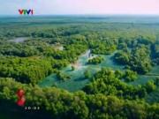 Du lịch - Rừng tràm Trà Sư, bữa tiệc màu xanh mùa nước nổi