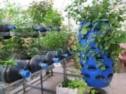 Giáo dục - du học - Lạ mắt vườn cây từ vật dụng tái chế của học sinh lớp 8