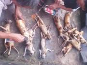 Tin tức trong ngày - Giết khỉ, khoe trên Facebook: Lộ đường dây mua bán động vật quý hiếm