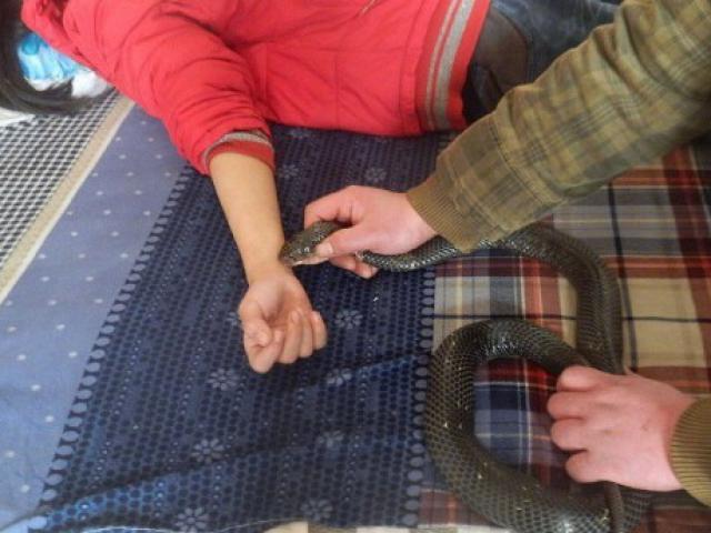 TQ: Bắt rắn cắn con gái để chữa bệnh lạ