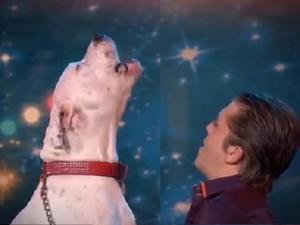 Phi thường - kỳ quặc - Video: Chú chó hát 'I Will Always Love You' cực đỉnh