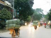"""Tin tức Việt Nam - Tôi đi làm nữ cửu vạn hàng lậu: Giữa vòng vây """"chim lợn"""""""