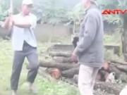 """Video An ninh - Clip: Lâm tặc """"xử"""" kiểm lâm, cướp lại gỗ"""