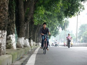 Tin tức trong ngày - HN sắp chặt hạ, đánh chuyển hàng cây cổ thụ phố Kim Mã