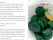 Thị trường - Tiêu dùng - Sự thật tin đồn khoai lang VN chứa chất độc màu da cam