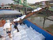 Thị trường - Tiêu dùng - Xuất khẩu gạo căng đến phút chót