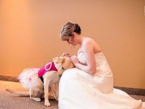 Bạn trẻ - Cuộc sống - Cảm động chú chó an ủi cô dâu trước lễ cưới