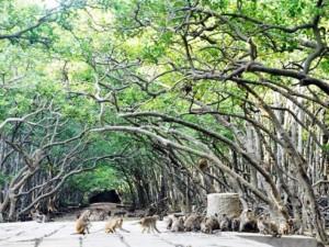 """Tin tức trong ngày - Đặt chân đến """"vương quốc khỉ"""" trên ốc đảo xanh ở Sài Gòn"""