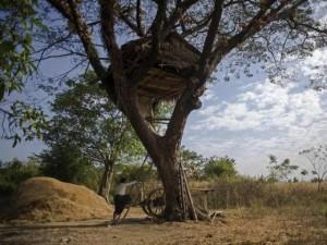 Độc đáo ngôi làng trên cây ở Myanmar