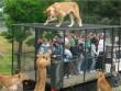 """Hãi hùng vườn thú """"nhốt"""" du khách để thú dữ quây"""