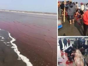 Tin tức trong ngày - Thực hư chuyện cá voi dạt vào bờ bị ngư dân xẻ thịt