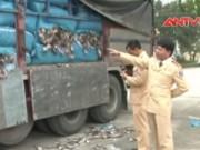 Video An ninh - Xe tải chất 20 tấn mực khô bốc mùi tuồn về Hà Nội