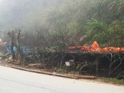 Tin tức trong ngày - Tận diệt đào rừng vì thú chơi… tao nhã