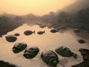 """Thế giới - 4 """"cụ"""" rùa khổng lồ nổi tiếng nhất thế giới"""