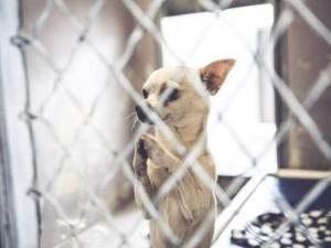 Thế giới - Chú chó chắp tay cầu khẩn được nhận nuôi