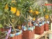 Thị trường - Tiêu dùng - Phật thủ bonsai chơi Tết tấp nập bung hàng