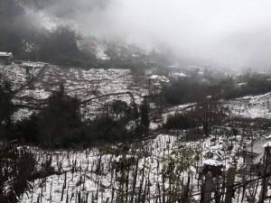 Tin tức trong ngày - Ảnh: Tuyết rơi phủ trắng Sa Pa