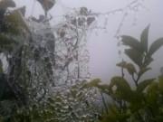 Tin tức trong ngày - Xuất hiện băng giá ở miền Tây Nghệ An, dân lo lắng