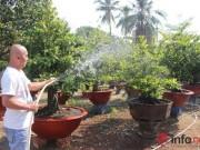 Thị trường - Tiêu dùng - TP.HCM: Nỗi lo của các chủ vườn mai khi ngày tết cận kề