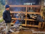 Tin tức trong ngày - Ảnh: Buốt lòng cảnh người dân Sapa khổ sở chống rét