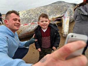 """Thế giới - Anh: """"Tự sướng"""" cạnh cá voi khổng lồ dạt vào bờ biển"""