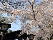 Du lịch - Sự thật thú vị ít ai biết về du lịch Nhật Bản