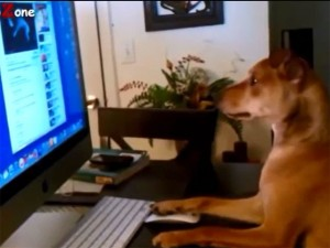 Bạn trẻ - Cuộc sống - Clip: Chó cưng với sở thích sang chảnh giống con người
