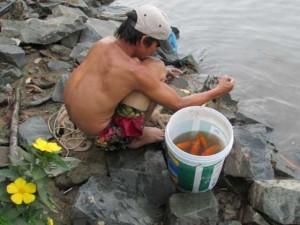 Tin tức trong ngày - Tiễn ông Táo: Người thả cá phóng sinh, kẻ kéo lưới thu về