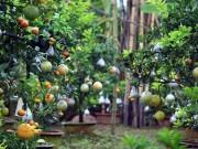 """Video An ninh - Ngắm vườn """"thập quả"""" cực độc đáo của lão nông Hà Nội"""