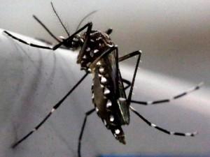"""Điểm nóng - Đề xuất triệt sản muỗi đực để ngăn virus """"ăn não"""" Zika"""
